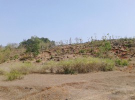 Agriculture Land in Kankadi, 4 Acres