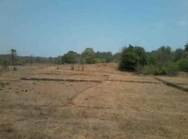 Agriculture land in Kankadi, Sakharpa