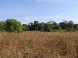 Agriculture Land in Devle