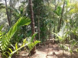 Coconut Wadi in Murud, Dapoli
