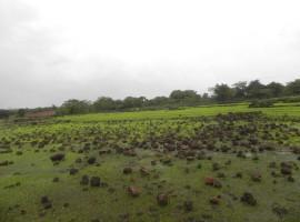 Agriculture Land in Konkan, Village Sangmeshwar, Tal Sangmeshwar, Dist Ratnagiri, Konkan100 Acres