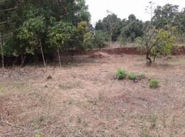 Agriculture Land in Konkan, Village Tulsani, Tal Sangmeshwar, Dist Ratnagiri Konkan 20 Guntha