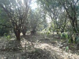 Mango Farm in Devle Sakharpa, Tal Sangmeshwar, Dist Ratnagiri Konkan 47 Guntha