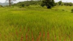 Agriculture Land in Konkan, Village Meghi, Tal- Sangmeshwar, Dist- Ratnagiri, 70 Guntha
