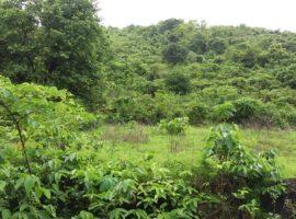 Agriculture Land in Konkan, Village Sakharpa, Tal Sangmeshwar, Dist Ratnagiri