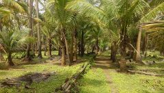 Guhagar Beach Touch Property for Sale in Konkan (Cinematic View)